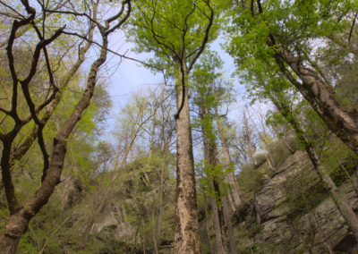 Cliffs and Old Growth in the Green River Gorge, Blue Ridge Escarpment